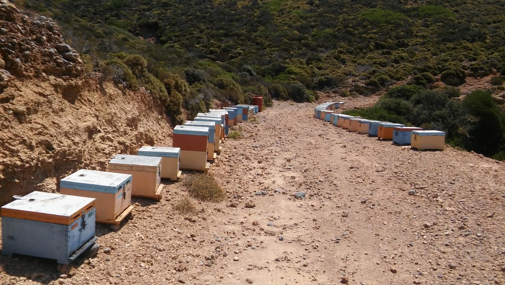 beekeeping place