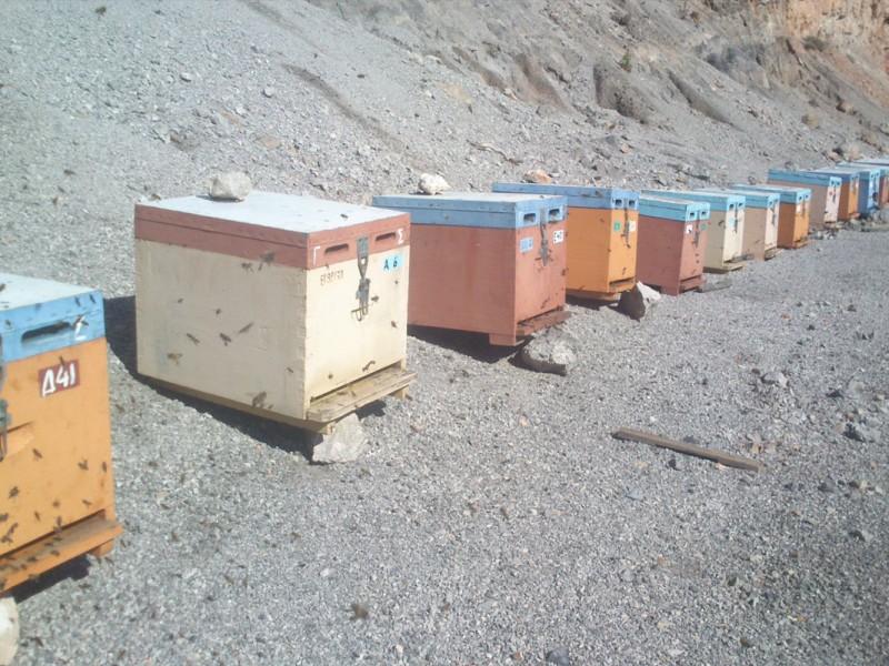 beekeeping1