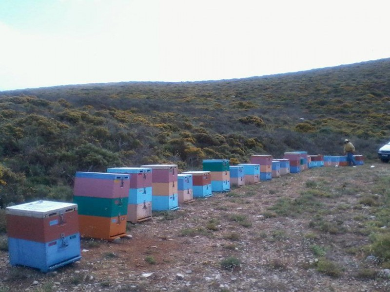 beekeeping13