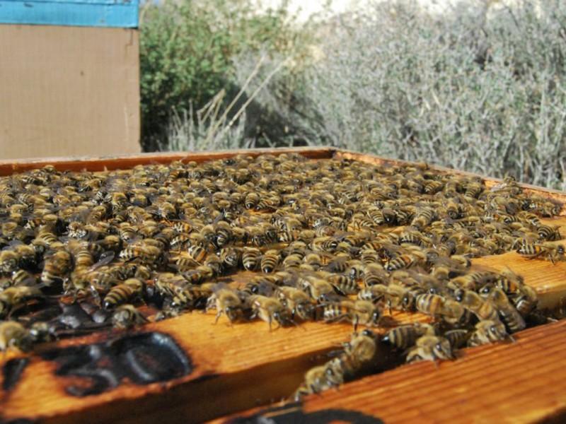 beekeeping14