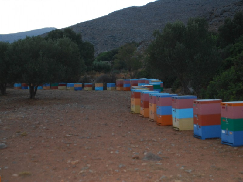 beekeeping6