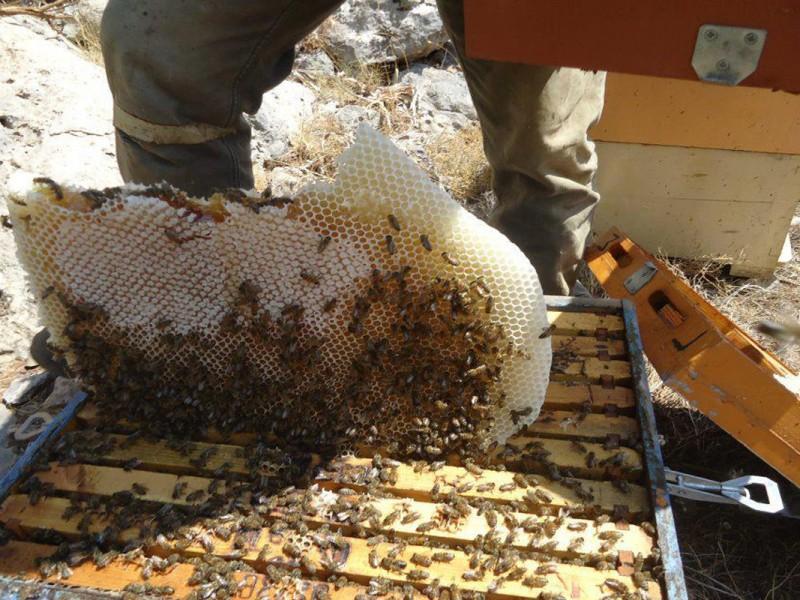 beekeeping8