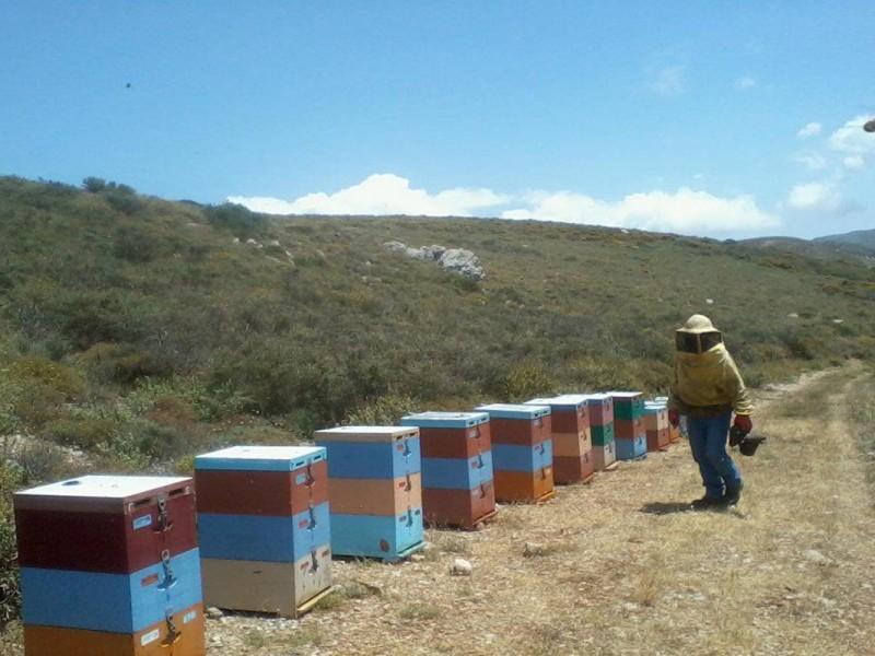 beekeeping9