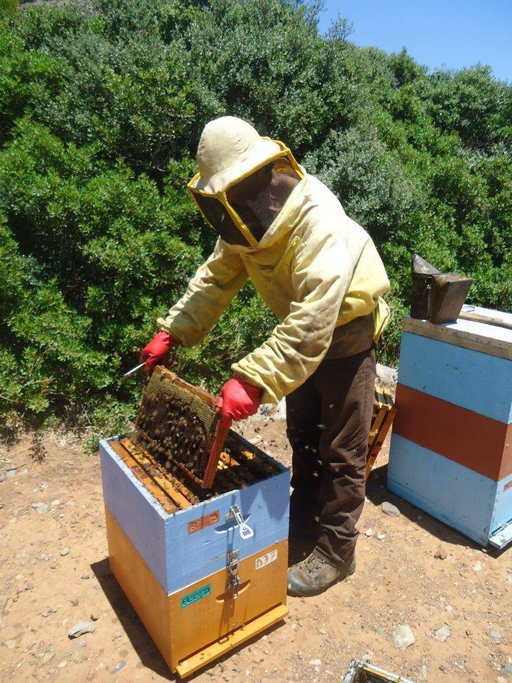 honey frame harvest