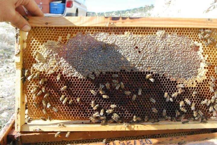 frame with fresh honey