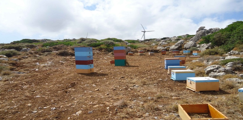 frames in hives