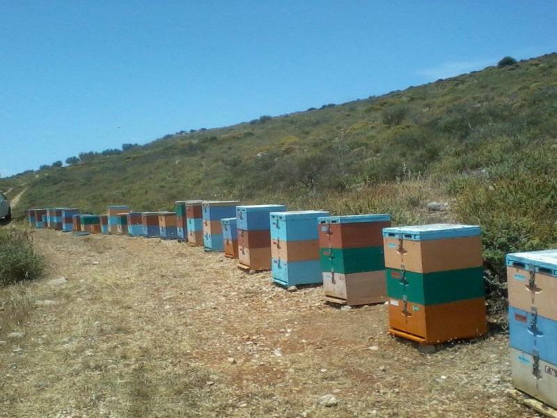 beekeeping15