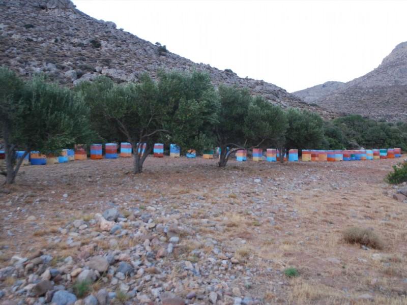 beekeeping5